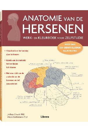 Anatomie van de hersenen