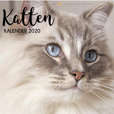 Kalender 2020: Katten