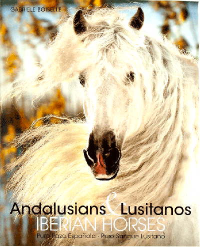 Andalusian & Lusitanos iberian horses