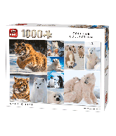 Puzzle Arctic Life (Collage collection) 1000 pcs