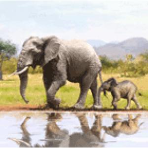 Crystal Card kit A51 elephants 18x18cm