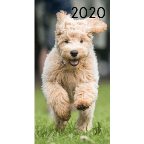 Agenda 2020: Honden