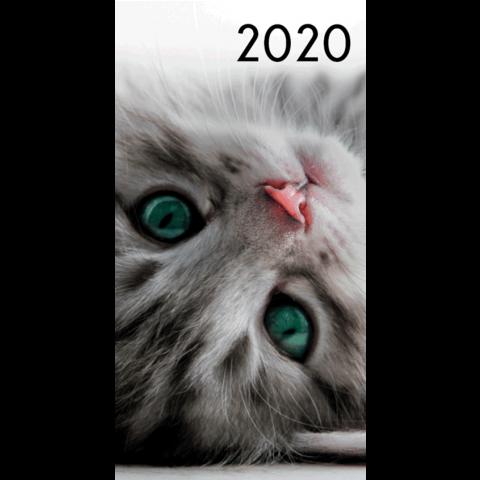 Agenda 2020: Katten